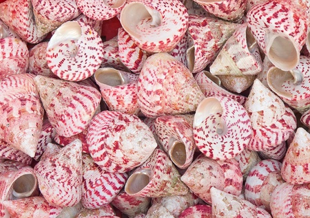 background made of red sea shells photo