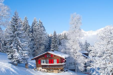 bosque con nieve: Invierno en los Alpes suizos, Suiza