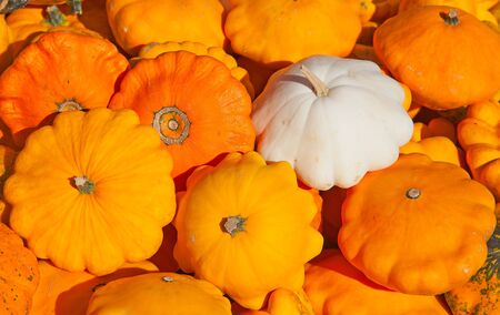 Colorful pumpkins collection on the autumn market photo