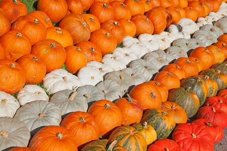 Colorful pumpkins collection on the autumn market Stock Photo - 10856954