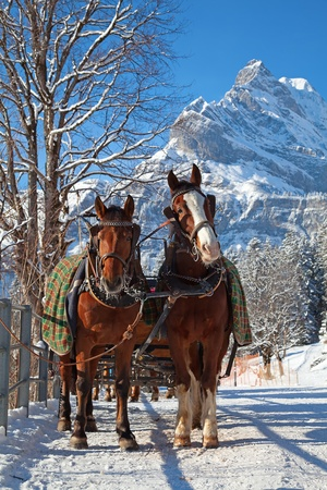 Winter in swiss alps (pair of horses in a small village) photo
