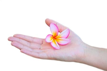 unwind: Hand holding pink frangipani flower