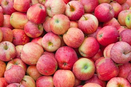 manzana roja: frescas manzanas rojas con gotas de agua