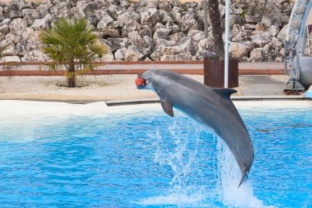 grampus: Bottlenose dolphin in the aquarium