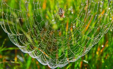 spider web with some water droplets early in the morning photo