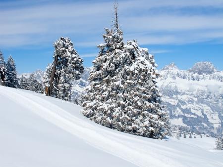 sledding: Winter in the swiss alps (Flumserberg, St.Gallen, Switzerland)