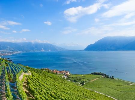 Weinberge des Lavaux über dem See Leman (Genfer See)