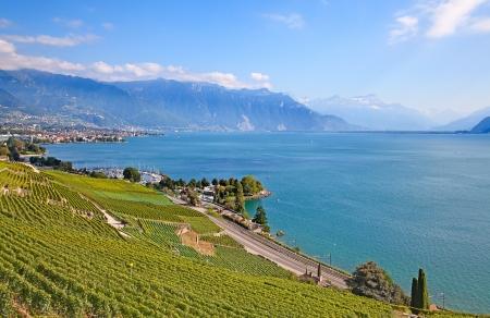 Wijngaarden van de regio Lavaux dan meer Leman (meer van Genève)