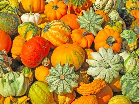 Kleurrijke pompoenen collectie op de herfst markt