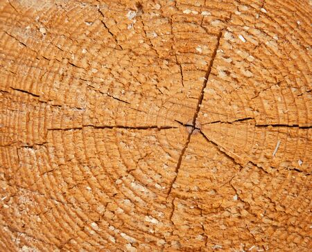 Fresh cut on the trunk at the lumber yard Stock Photo - 16800087