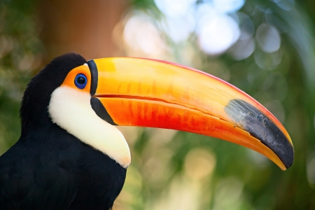 amazon rainforest: Colorful tucan  in the aviary Stock Photo