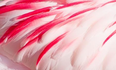 Texture of pink flamingo feathers Standard-Bild