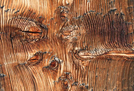 scabrous: Weathered natural wood texture background Stock Photo