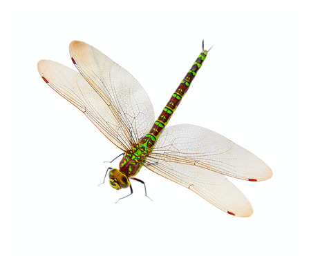 Colorful dragonfly isolated on white background Stock Photo - 25644478