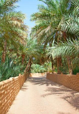 palm garden: Palm garden in the Al Ain oasis