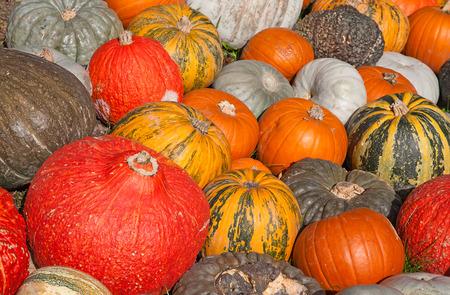 calabaza: Colección de calabazas coloridos en el mercado de otoño