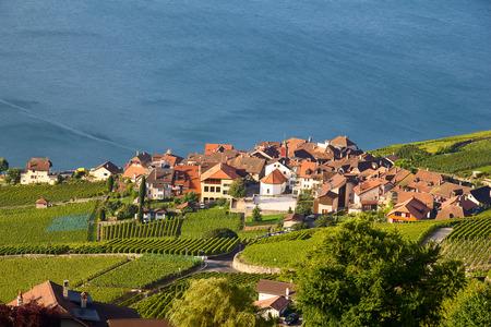 uvas: Vineyards of the Lavaux region over lake Leman (lake of Geneva)