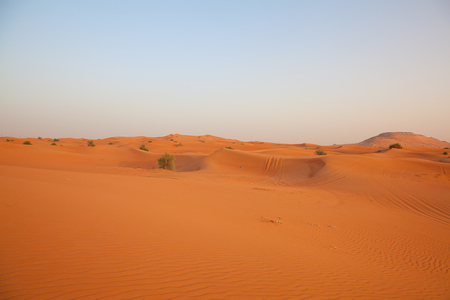 sand dune: Red sand Arabian desert near Dubai, United Arab Emirates