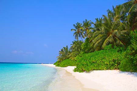 island paradise: Maldivian island. Paradise in tropics.