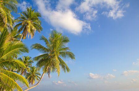 tropics: Maldivian island. Paradise in tropics.