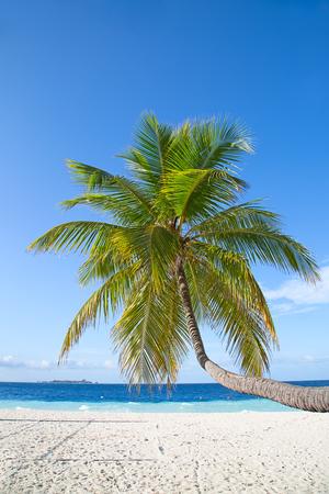 azure: Maldivian island. Paradise in tropics.