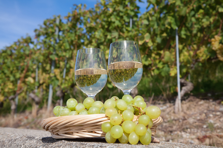 montreux: Vineyards of the Lavaux region over lake Leman (lake of Geneva)