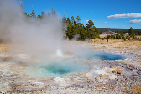 spasmodic: Spasmodic geyser eruption in the Yellowstone national park, USA