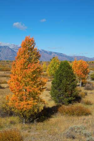 Grand Teton National Park, Wyoming, USA