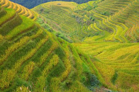 mi: The Longsheng Rice Terraces(Dragons Backbone) also known as Longji Rice Terraces are located in Longsheng County, about 100 kilometres (62 mi) from Guilin, Guangxi, China