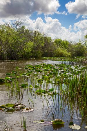 Everglades National Park, Florida, USA Stok Fotoğraf