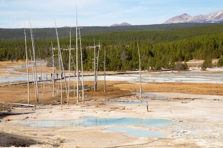 Norris geyser basin in the Yellowstone National park, USA 스톡 콘텐츠 - 132114243