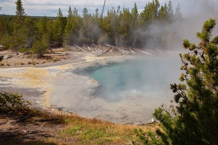 Norris geyser basin in the Yellowstone National park, USA 스톡 콘텐츠