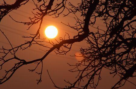 pflanze: Landschaft mit Baum und Sonne