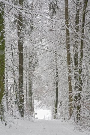 wintery snowy: Forest road in winter