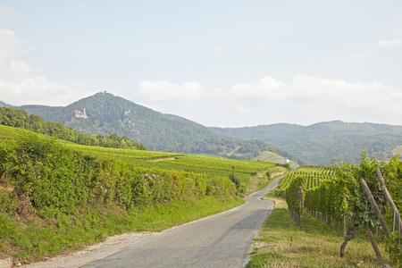 wine road: Wine Road Alsace