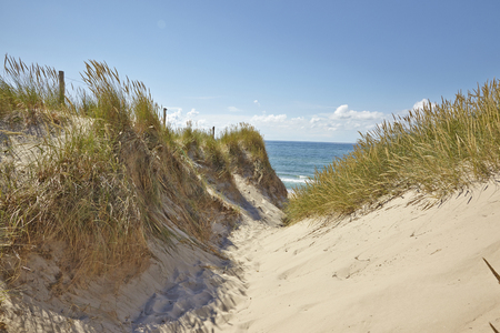 foot path: Foot path to Beach in Skagen, Jutland, Denmark Stock Photo