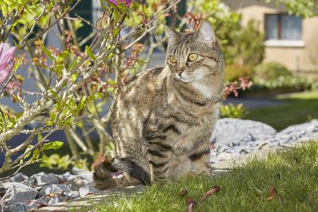 tabby cat in garden Stock Photo