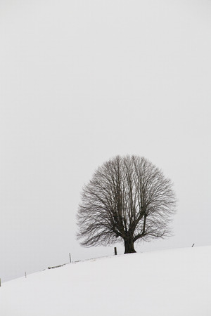 lime tree: winter landscape, lime tree Stock Photo
