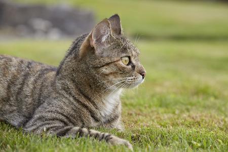 Tabby cat portrait in garden Stock Photo