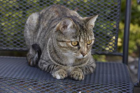 Tabby Katze Porträt im Garten Lizenzfreie Bilder