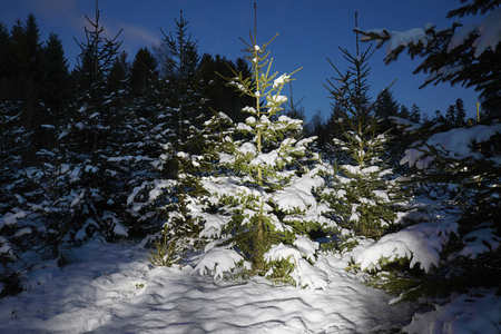 Snow winter fir with light painting. Christmas