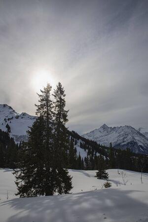 Hasliberg mountains in winter snow tree
