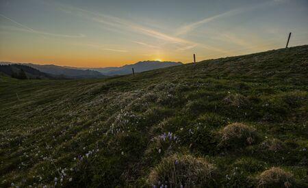 Sunrise over Emmental with crocus flowers