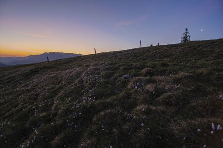 Sunrise over Emmental with crocus flowers Stock Photo - 147775674