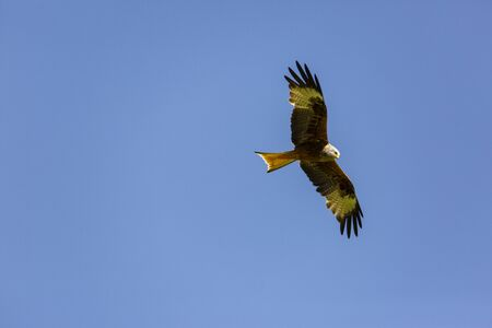 Red and black kite in the air Stock Photo - 147588509