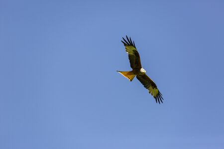 Red and black kite in the air
