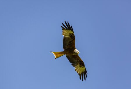 Red and black kite in the air Stock Photo - 147583559