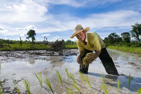 planting season: asian male rice farmer at work on a sunny day with a plow in the background Stock Photo
