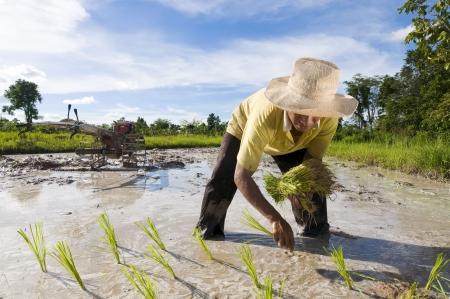 campesino: agricultores de arroz masculino asi�tico en el trabajo en un d�a soleado con un arado en segundo plano  Foto de archivo