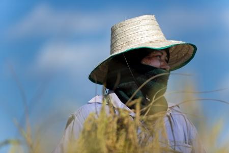 farm worker: female rice farm worker against blue sky